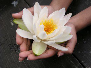 hands with waterlily