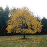 falltree-cc