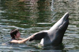 maddye-dolphin